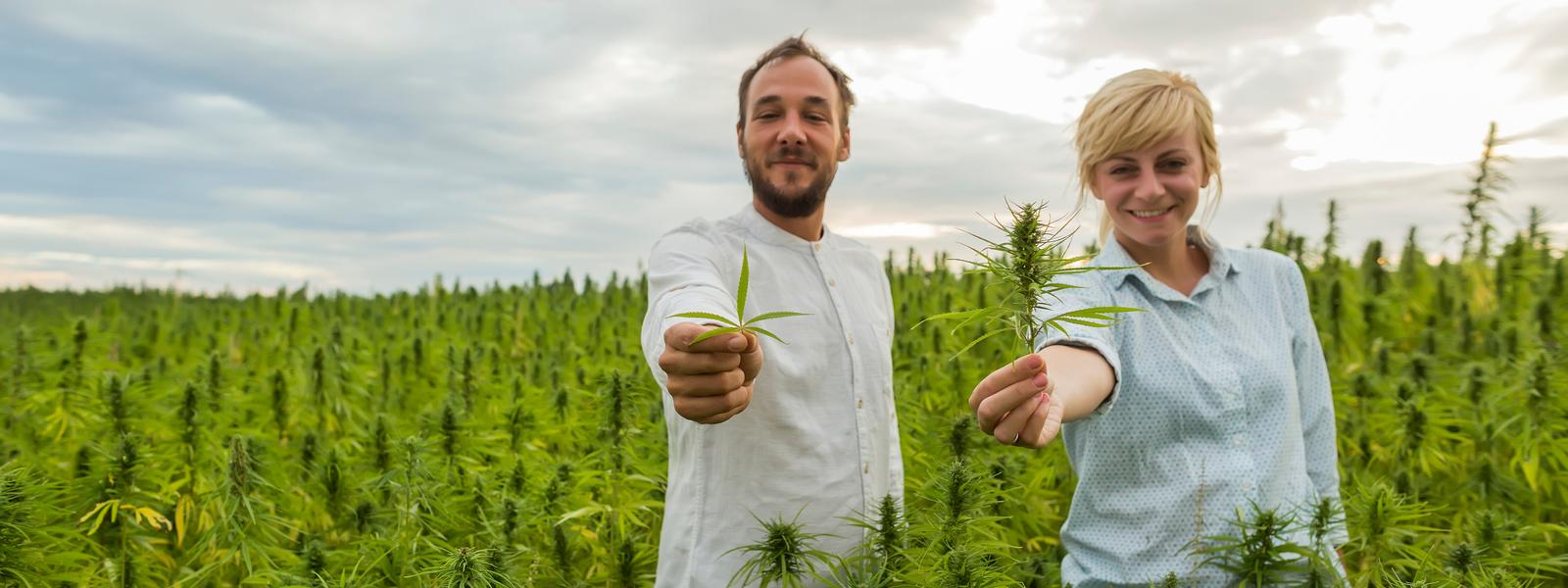 Cannabis Insurance Massachusetts